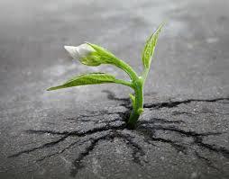 Perseverare è sempre diabolico? | Crescita-Personale.org